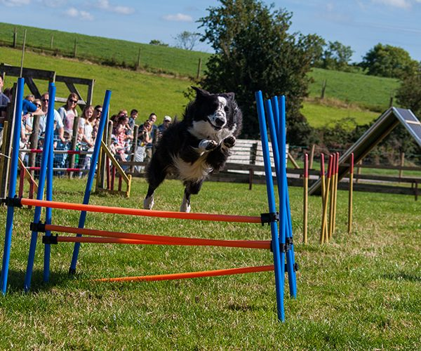 Rugby Dog Agility Show: Streamvale Open Farm