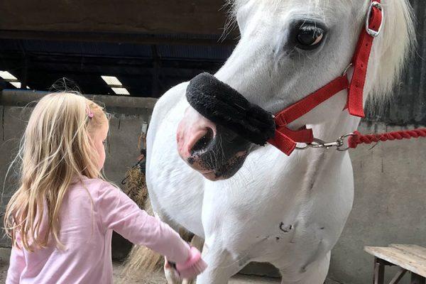 Pony Grooming