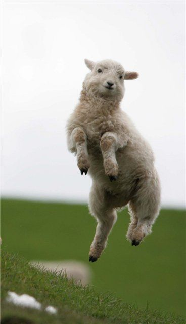 Are Ewe As Excited About The Bank Holiday Weekend
